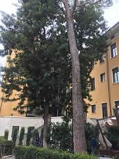 gravillea-2